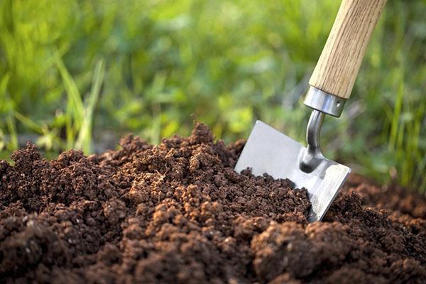 подготовка почвы к высадке рассады