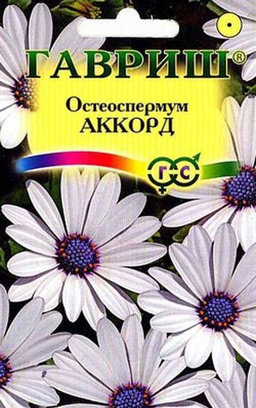 остеоспермум Аккорд