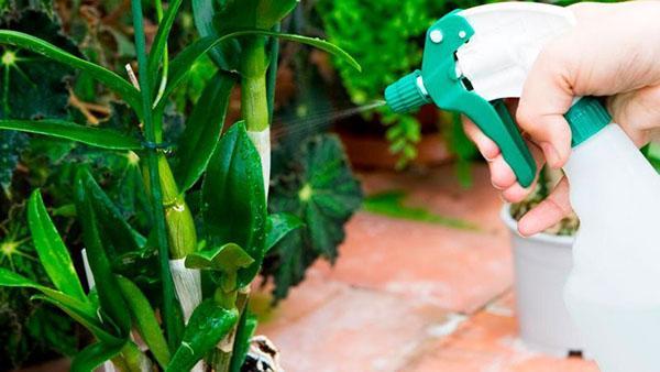 Алирин-Б для комнатных растений