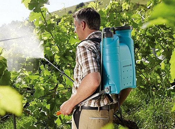 обработка винограда препаратом БИ-58 новый