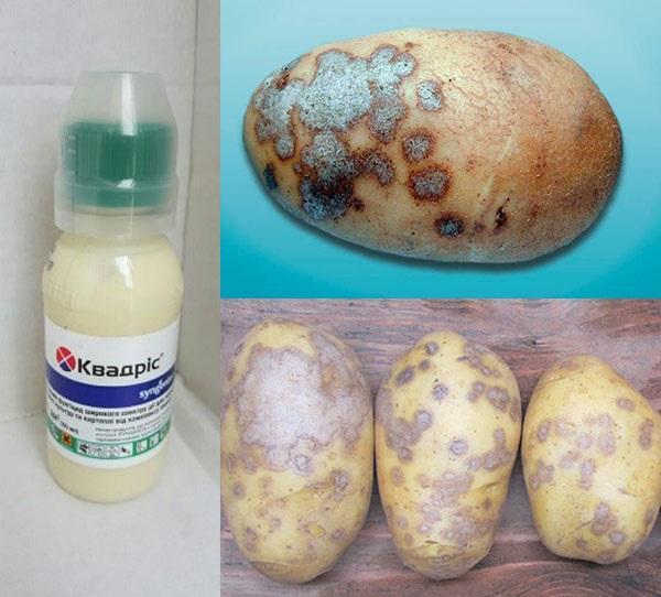 квадрис для обработки картофеля