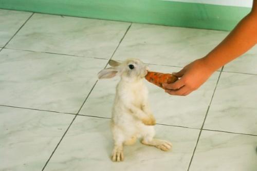 как дрессировать кроликов