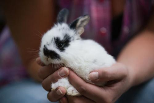 приручение кроликов