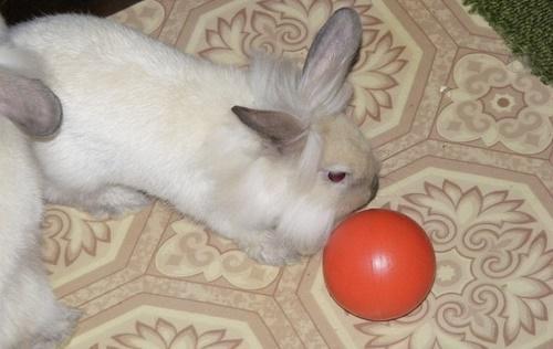 кролик играет мячом