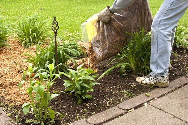 защита цветов от сорняков