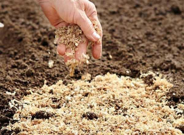 внесение опилок в почву