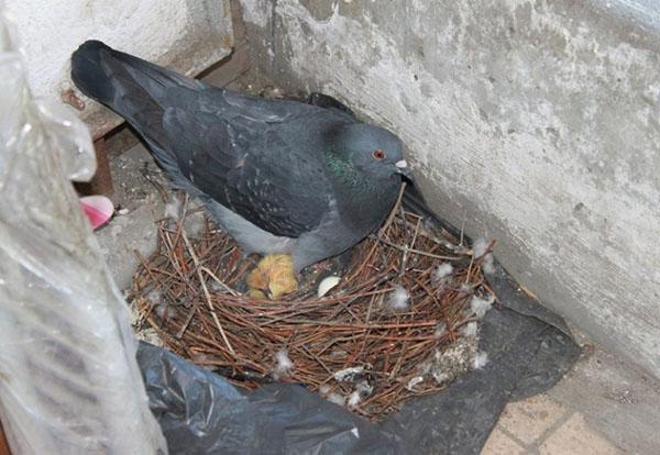 первые птенцы