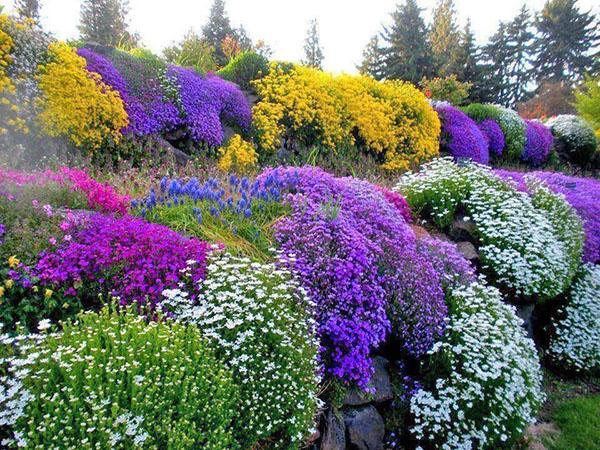 прекрасная композиция из цветущих многолетников