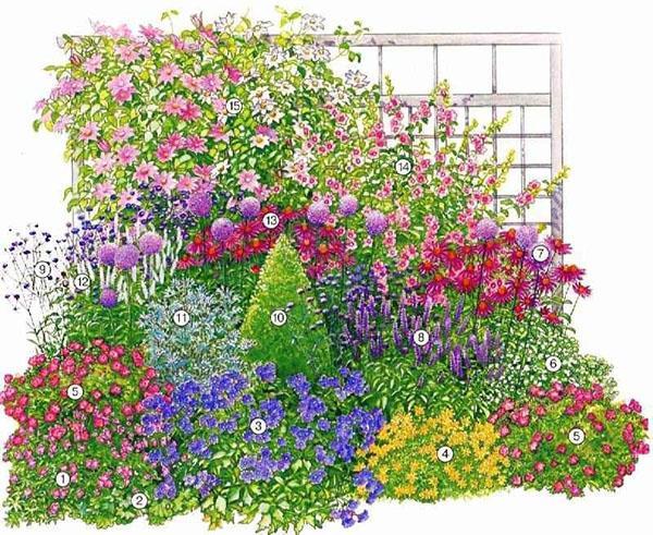 схема размещения растений