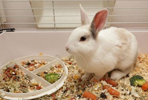 рацион кролика