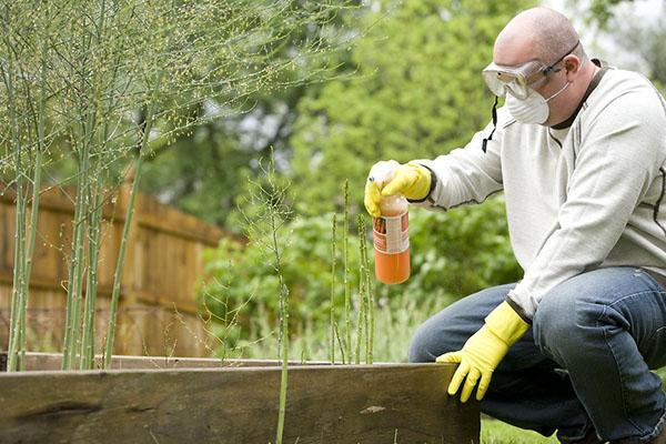 техника безопасности при работе с инсектицидами