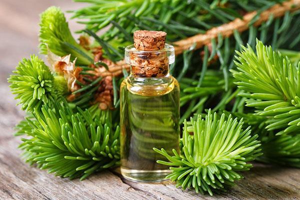 лечебные свойства масла пихты