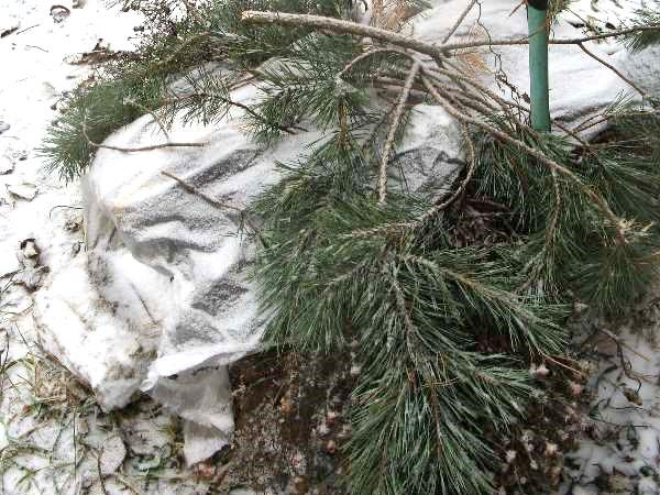 подготовка лука к зиме