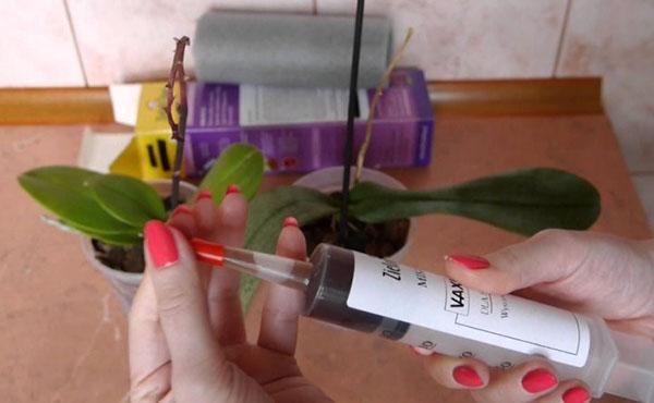 вакцинация растений микоризой
