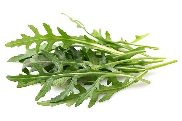 низкая калорийность салата руккола
