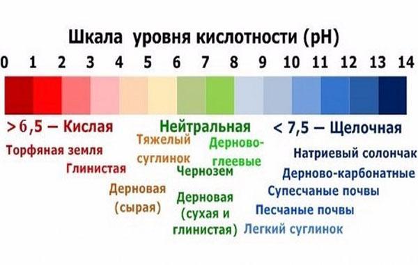 шкала уровня кислотности