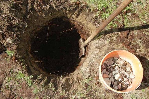 яма для посадки кипарисовика
