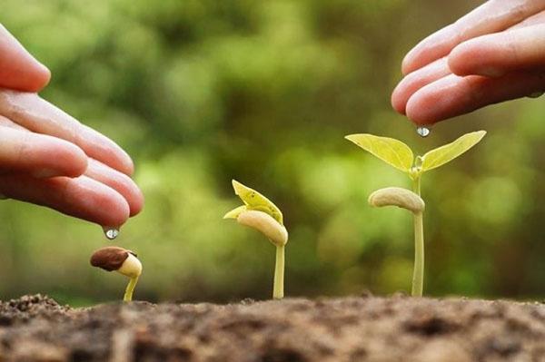 улучшение роста растений