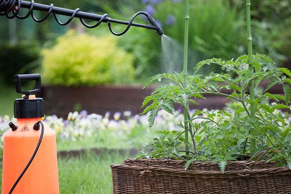 обработка растений регулятором роста