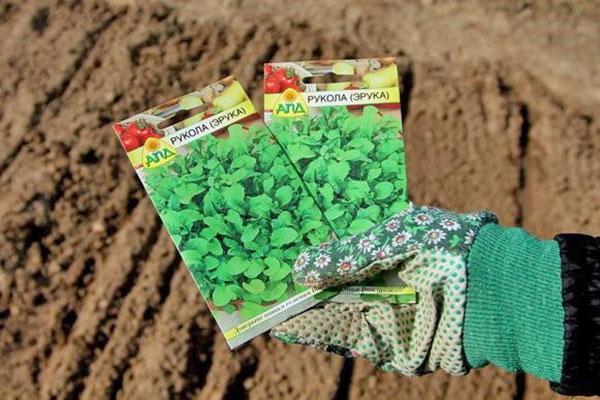 время посева семян рукколы