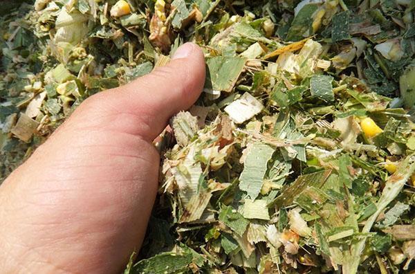 сочный витаминный корм для скота