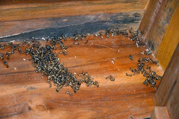 гибель муравьев