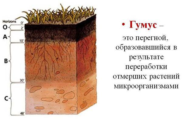 гумус в агрономии
