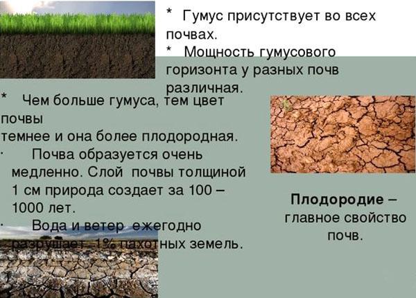 процесс образования гумуса
