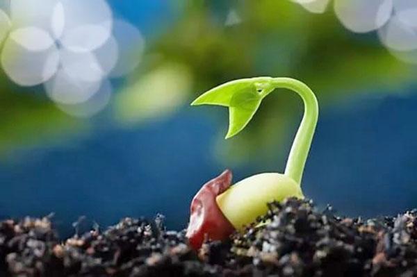 быстрый рост растения
