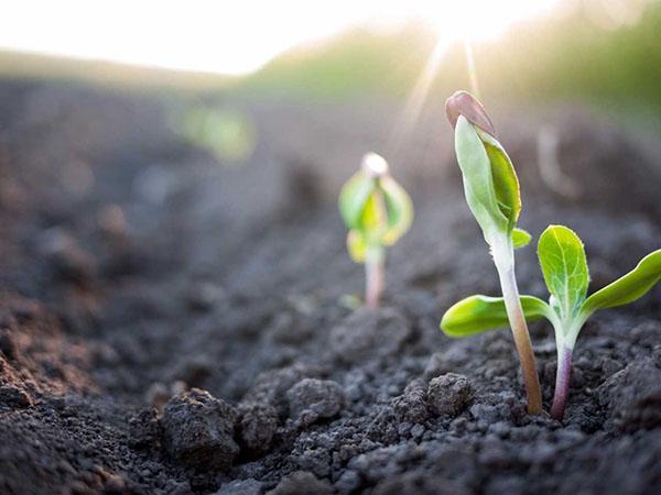 быстро всходят семена