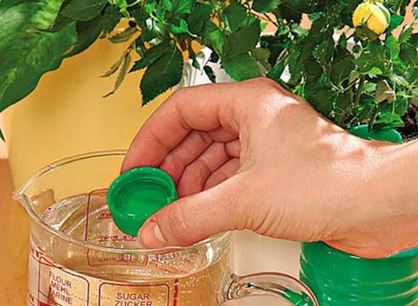 использование этамона для комнатных растений