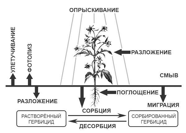 работа гербицидов