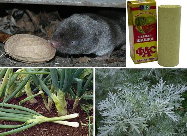 растения в борьбе с землеройкой