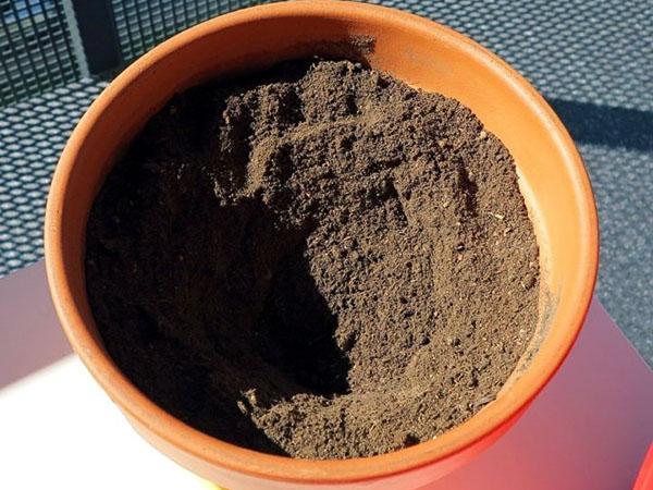 почва для хамедореи