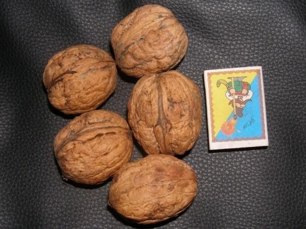крупноплодные сорта ореха