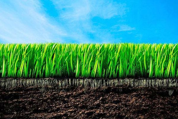 равномерный рост травы