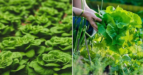 полезный для здоровья салат