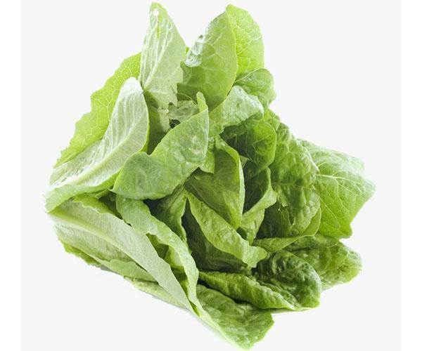 салат латук полезен для беременных