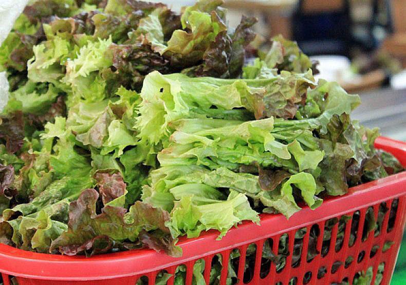 мужчинам нужно употреблять салат латук