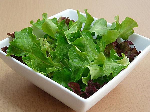 салат латук в кулинарии