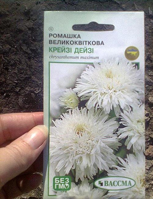 семена ромашки садовой нивяник