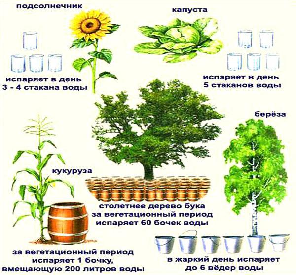 суточный ход транспирации у разных растений
