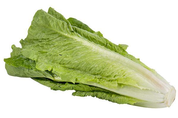 выращивание салата ромэн