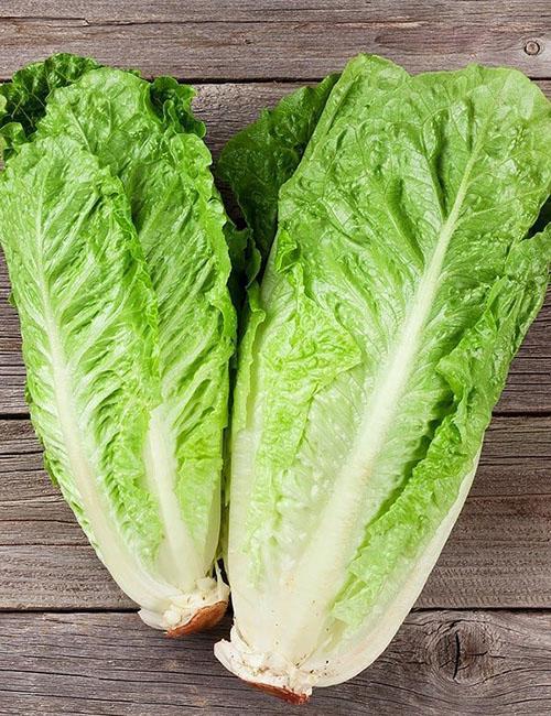 сочные листья салата ромэн