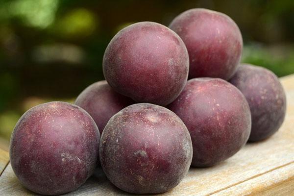 вкусные плоды абрикоса черный бархат