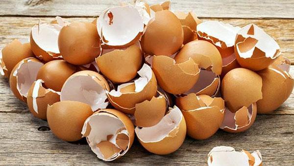 скорлупа яиц
