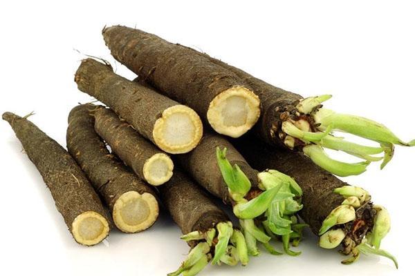 полезный для здоровья корень