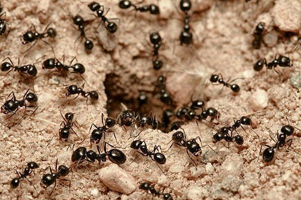 поселение муравьев