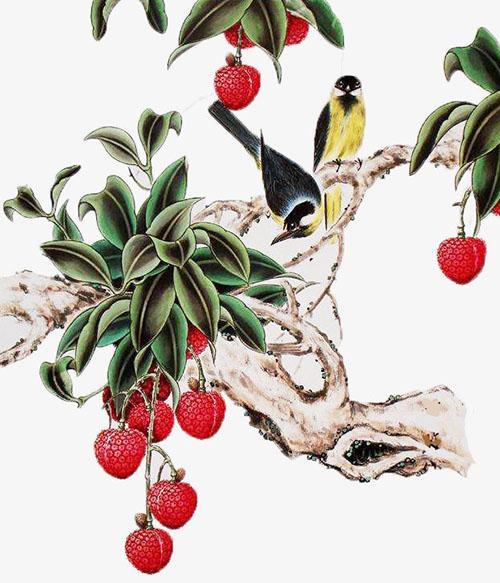 полезные и вкусные плоды личи