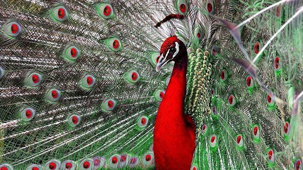удивительно красивая птица